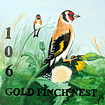 106-gold-finch